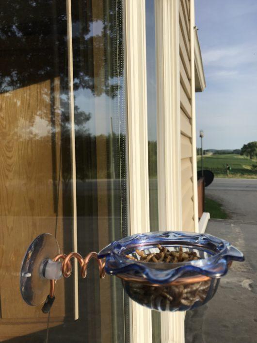 Window Bluebird