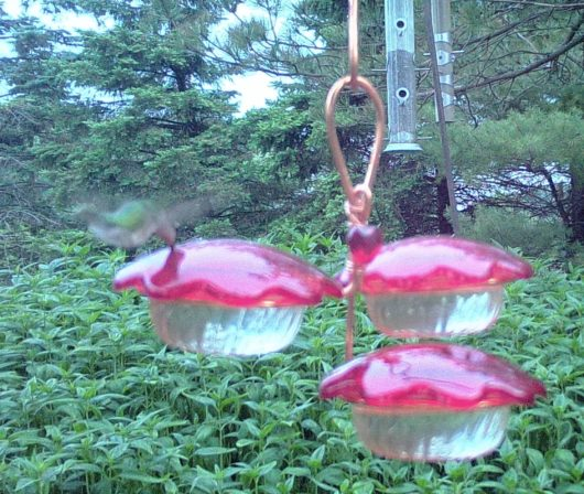 9 oz Hummingbird Feeder