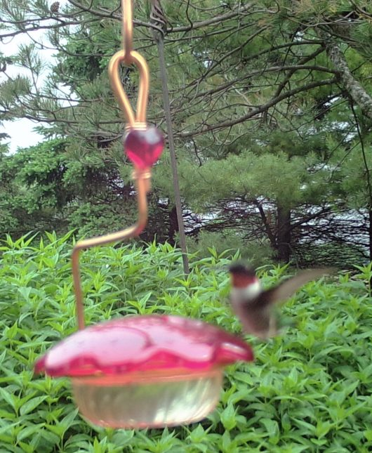 3 oz Hummingbird Feeder