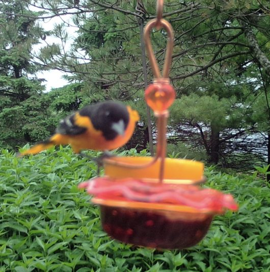 Double Staggered Oriole Feeder