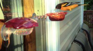 Window Oriole Feeder Item #001