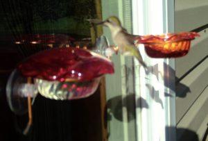Window Hummingbird Feeder- Item #002