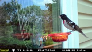 Window Oriole Feeder